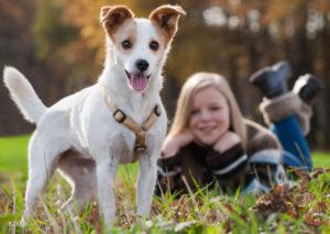 grăsime de câine pentru dureri articulare